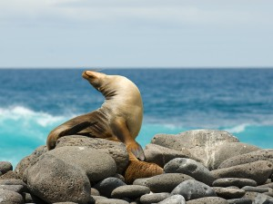 bigstock-Sea-Lion-small